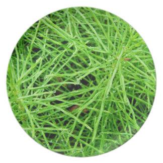 Green Grass Fireworks; No Text Plates