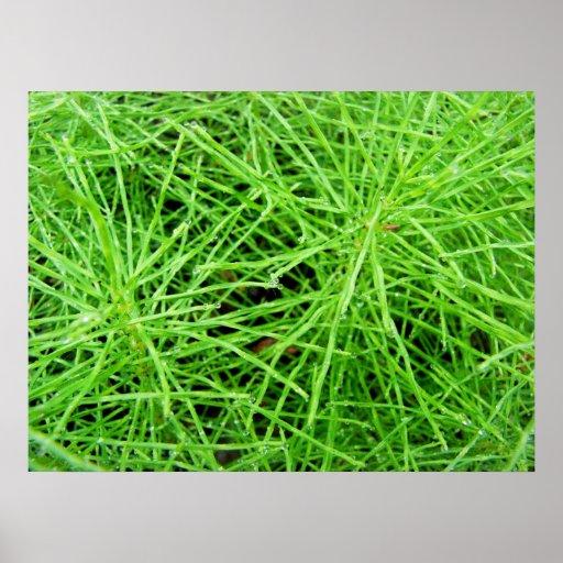 Green Grass Fireworks Poster