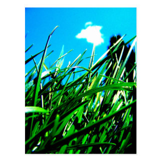 Green Grass Postcard