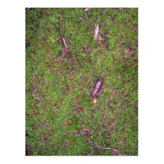 Green Grass Surface Texture Postcard