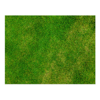 Green Grass Texture Postcard