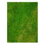 Green Grass Texture Postcard