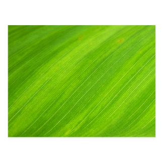 Green Grass Textured Art Postcard