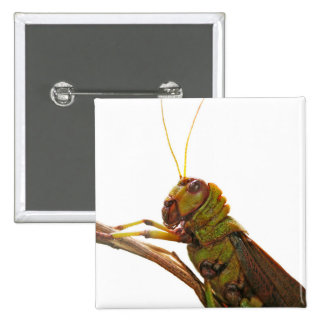 Green Grasshopper close up details 2 Inch Square Button