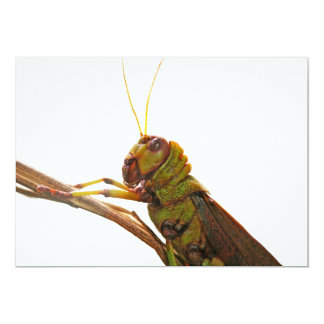 Green Grasshopper close up details Card