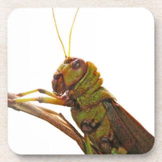 Green Grasshopper close up details Coaster