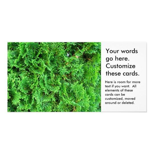 Green growing evergreen shrub colorful art photo card