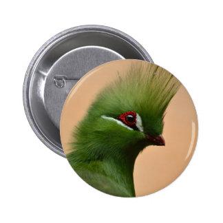 Green Guinea Turaco bird Pinback Buttons