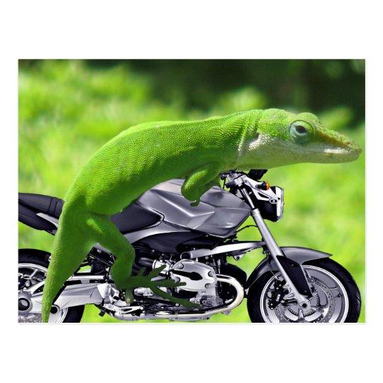 Green Hawaiian Gecko Rider Postcard