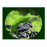 Green Hawaiian Gecko Rider Postcards