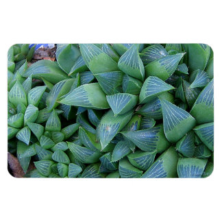 Green Haworthia Plants Magnet
