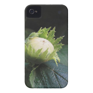 Green hazelnut on the tree in a garden in Tuscany, Case-Mate iPhone 4 Case