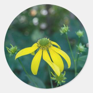Green-Headed Coneflower Yellow Wildflower Stickers