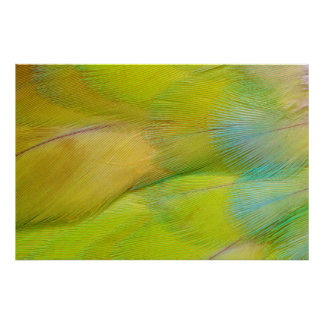 Green Headed Parrot Horizontal Poster