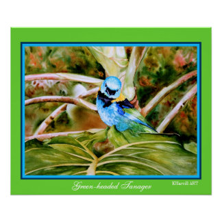Green-headed Tanager Fine Art Poster