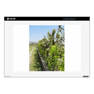 """Green hedge of pear and apple trees with blue sky decal for 15"""" laptop"""
