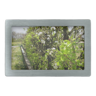 Green hedge of pear and apple trees with blue sky rectangular belt buckle