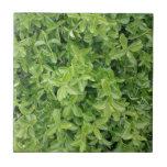 [ Thumbnail: Green Hedge Shrub Type Plant Photograph Photo Tile ]