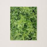 [ Thumbnail: Green Hedge Shrub Type Plant Photograph Puzzle ]