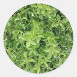 [ Thumbnail: Green Hedge Shrub Type Plant Photograph Sticker ]