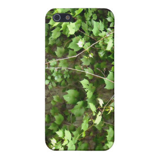 Green Hedge with tiny yellow flowers iPhone 5 Covers