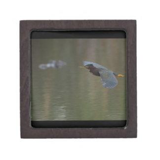 green heron & alligator jewelry box