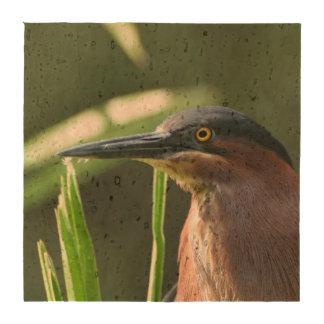 Green Heron Bird Drink Coaster