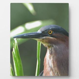 Green Heron Bird Photo Plaques