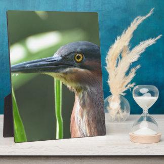 Green Heron Bird Display Plaques