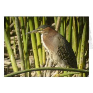 Green Heron Card