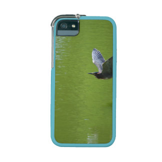 Green Heron In Mid Air iPhone 5/5S Cover