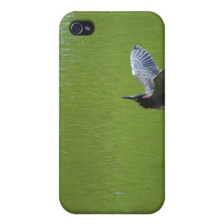 Green Heron In Mid Air iPhone 4/4S Covers