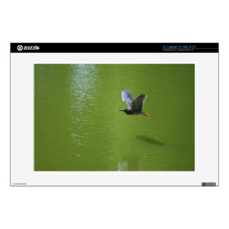 Green Heron In Mid Air Decals For Laptops