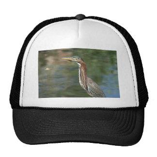 Green Heron Mesh Hats