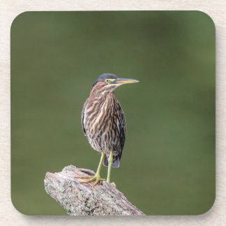 Green Heron on a log Coaster
