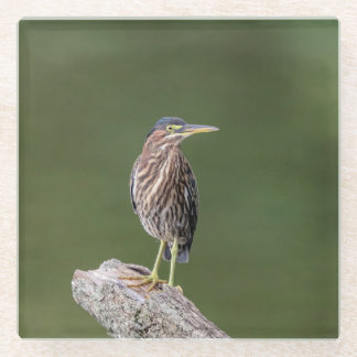 Green Heron on a log Glass Coaster