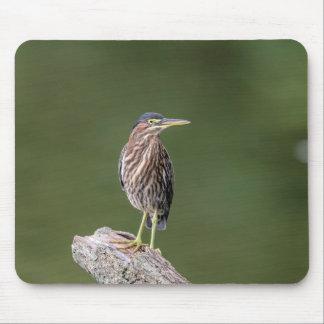 Green Heron on a log Mouse Pad