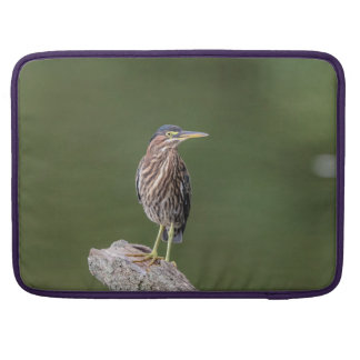 Green Heron on a log Sleeve For MacBook Pro
