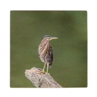 Green Heron on a log Wood Coaster
