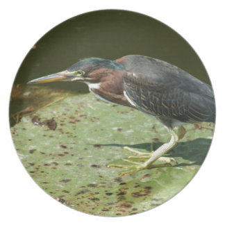 Green Heron on Giant Lily Pad Dinner Plate