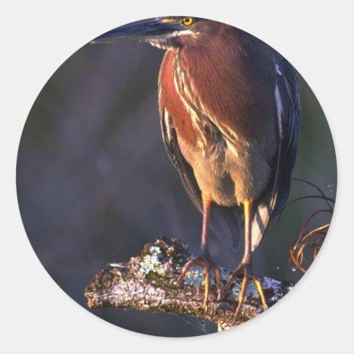 Green heron round stickers