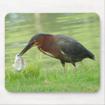 Green Heron with fish Mousepad 2