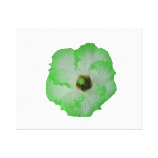 Green hibiscus flower canvas print