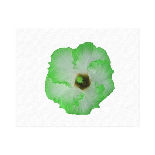 Green hibiscus flower canvas print