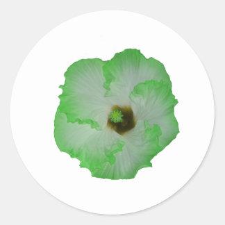Green hibiscus flower classic round sticker
