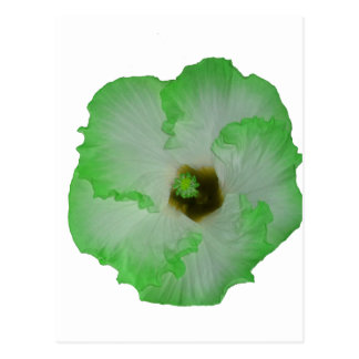 Green hibiscus flower post cards