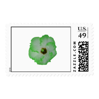 Green hibiscus flower postage stamps