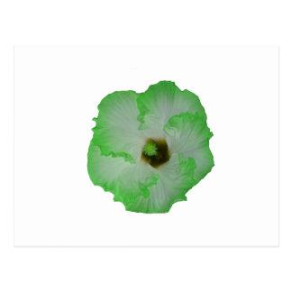 Green hibiscus flower postcard