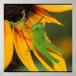 Green Hopper Print