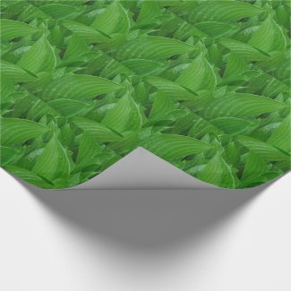 Green Hosta Leaves with Raindrops Wrapping Paper